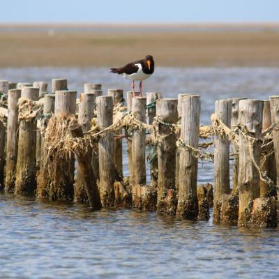 Bird on pole in the Wadden Sea | By the Wadden Sea